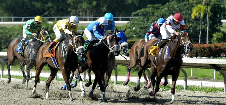 Camarero is the island's only horse racing track located 15 minutes from the Isla Verde hotel sector and a 20 minute drive from San Juan taking Route 66.