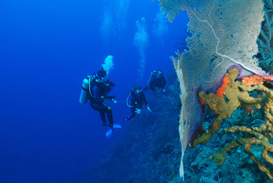 La Parguera is the gateway to some of the finest scuba diving in the world. Nearby is the legendary La Pared.